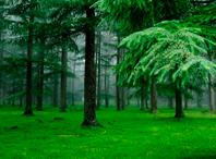 Как мы сажали лес