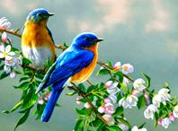 Всемирный день птиц