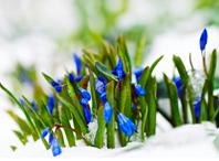 Встречаем весну